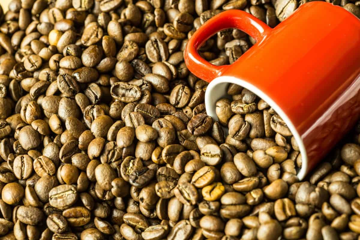 Newly rediscovered 'Coffea Stenophylla' could be the Future of Coffee