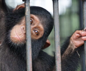 The legal trade in wildlife poses pandemic risks too