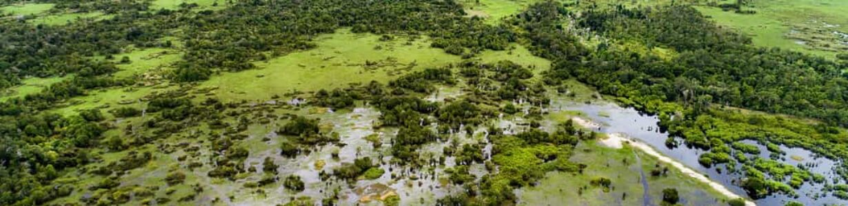 Peatlands worldwide are drying out, threatening to worsen climate change