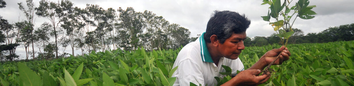 By reducing air pollution we can boost crop yields