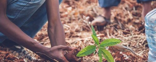 Scaling up reforestation can help us manage climate change