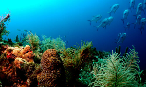 To save coral reefs, we'll need to cut global emissions fast