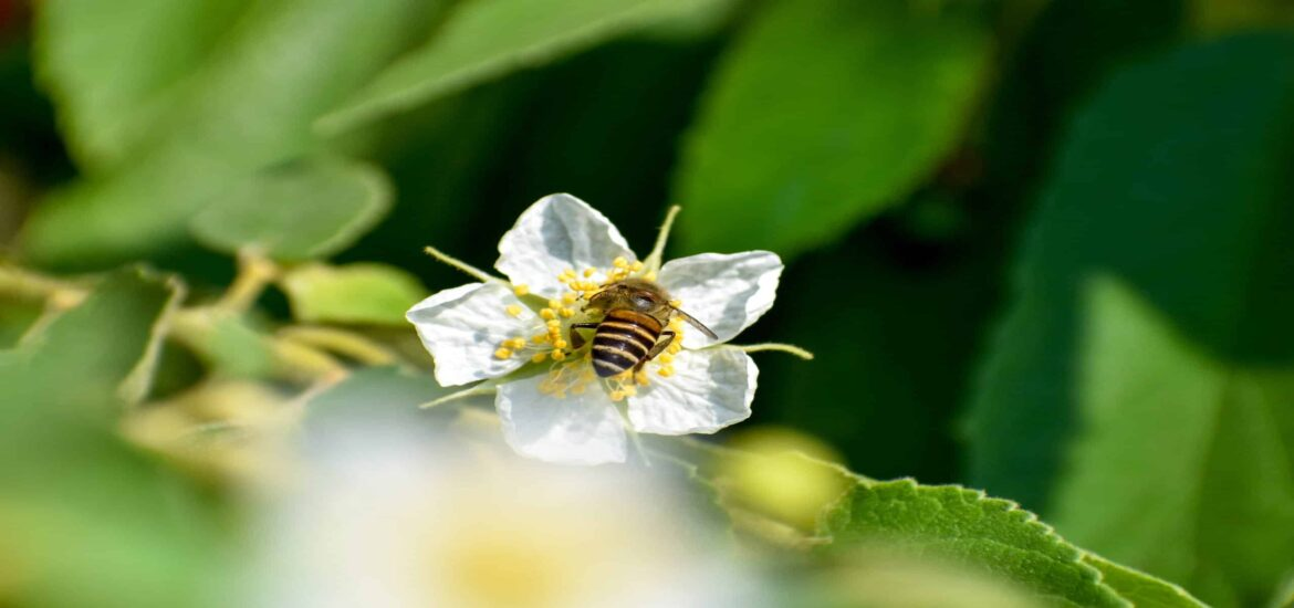 A diversity of flowering plants is key to bees and bumblebees