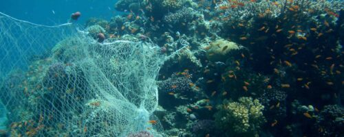 Discarded fishing nets are a menace to corals and marine life