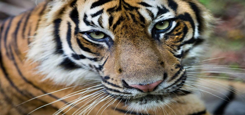Gabon, Costa Rica call for new UN protocol on wildlife trade