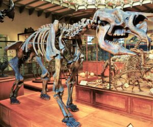 Size alone 'did not cause ancient megafauna to go extinct'