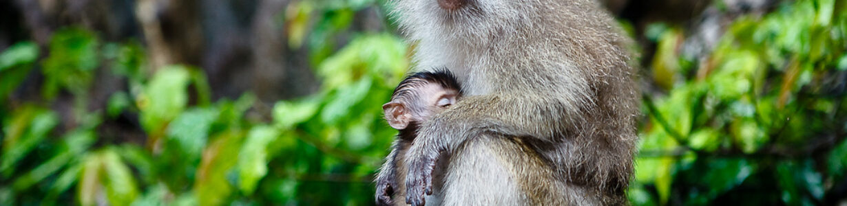 Scores of Thai macaques are rescued from China's exotic meat trade