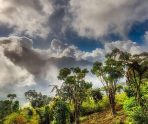 Mountain forests in Africa store plenty more carbon than previously thought