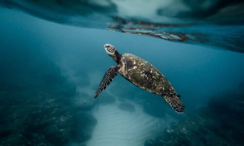 The Escazú Agreement shows how countries can collaborate to save species