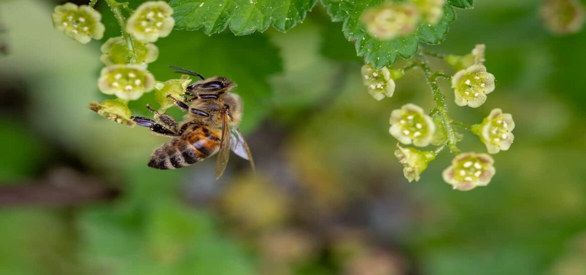 Greening empty lots in cities can help bees out