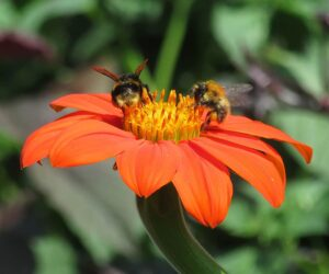 The media will need to heed the plight of pollinators