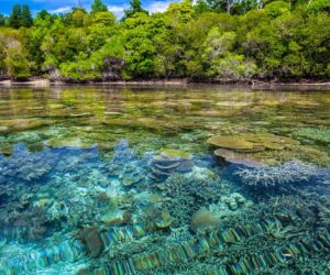 We must pull out all the stops to save coral reefs, experts say