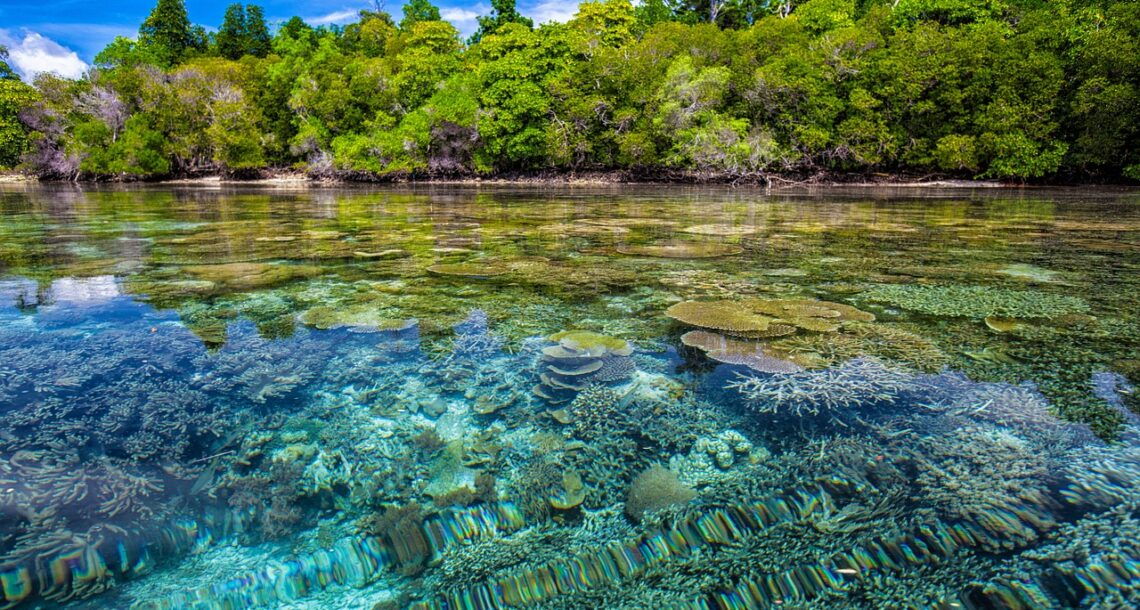 Planting trees in coastal areas can help stressed coral reefs