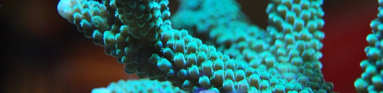 The built-in resilience of corals could help them survive climate change