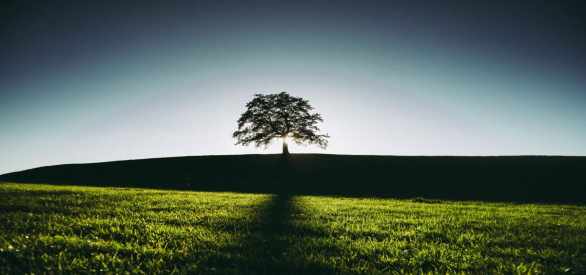 How small businesses can make a big environmental impact