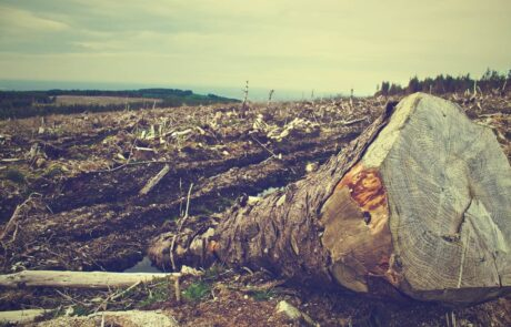 'Ecocide' must be recognized as a global crime