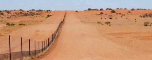 Fence study shows dingo's role in desert biodiversity