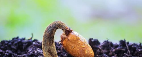 Coating their seeds could fortify crops in arid regions