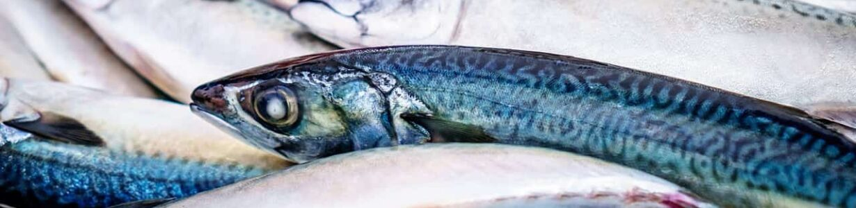 Sustainably produced 'blue food' could feed billions of people