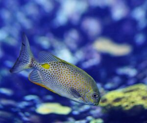 Marine life is fleeing the equator to cooler waters. Mass extinction could follow