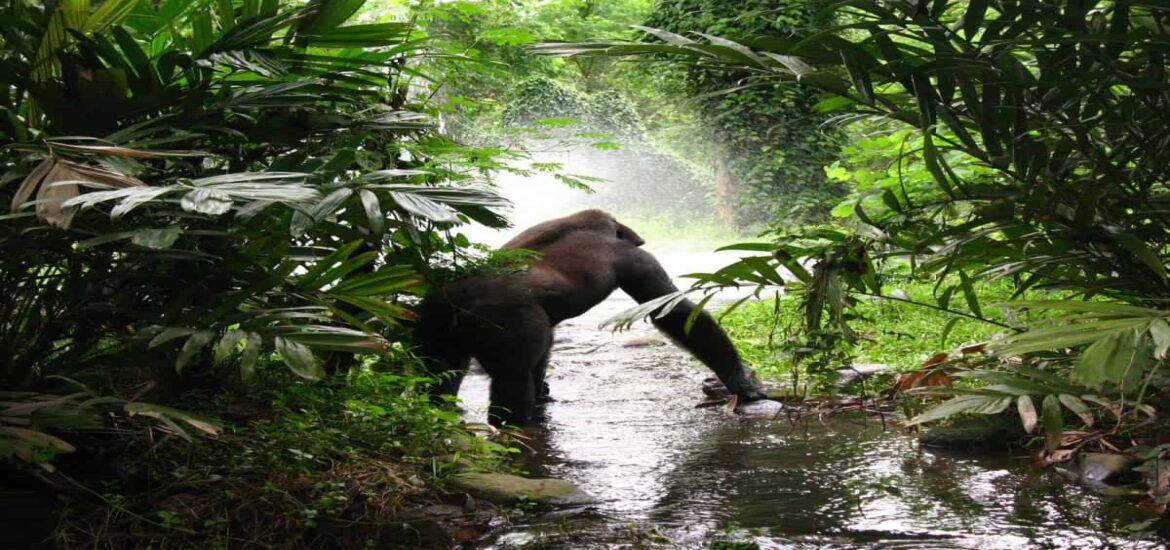 Africa's rainforests can endure more heat and drought… up to a point