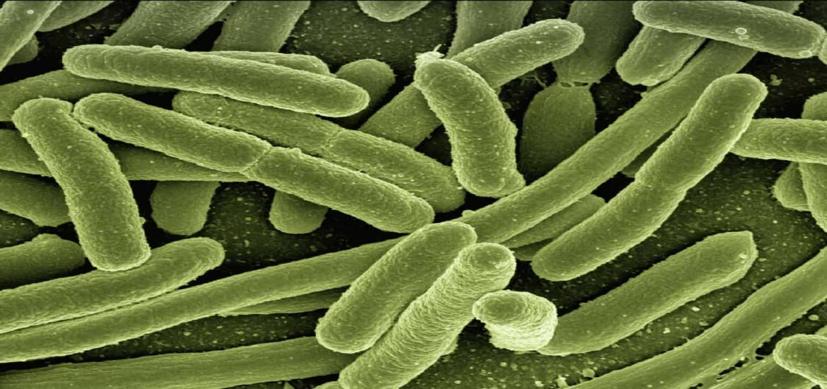 Bacteria could help us store energy and create biofuels