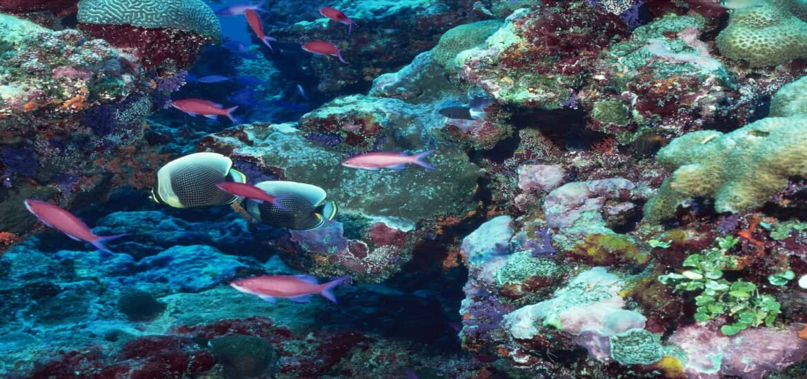Food webs at coral reefs are more delicate than previously thought