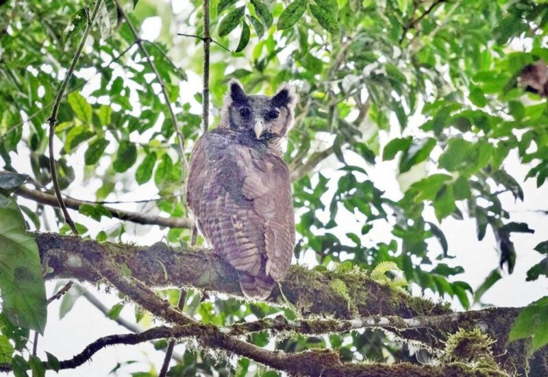 Rare owl sighting in Africa is a bright spot for biodiversity