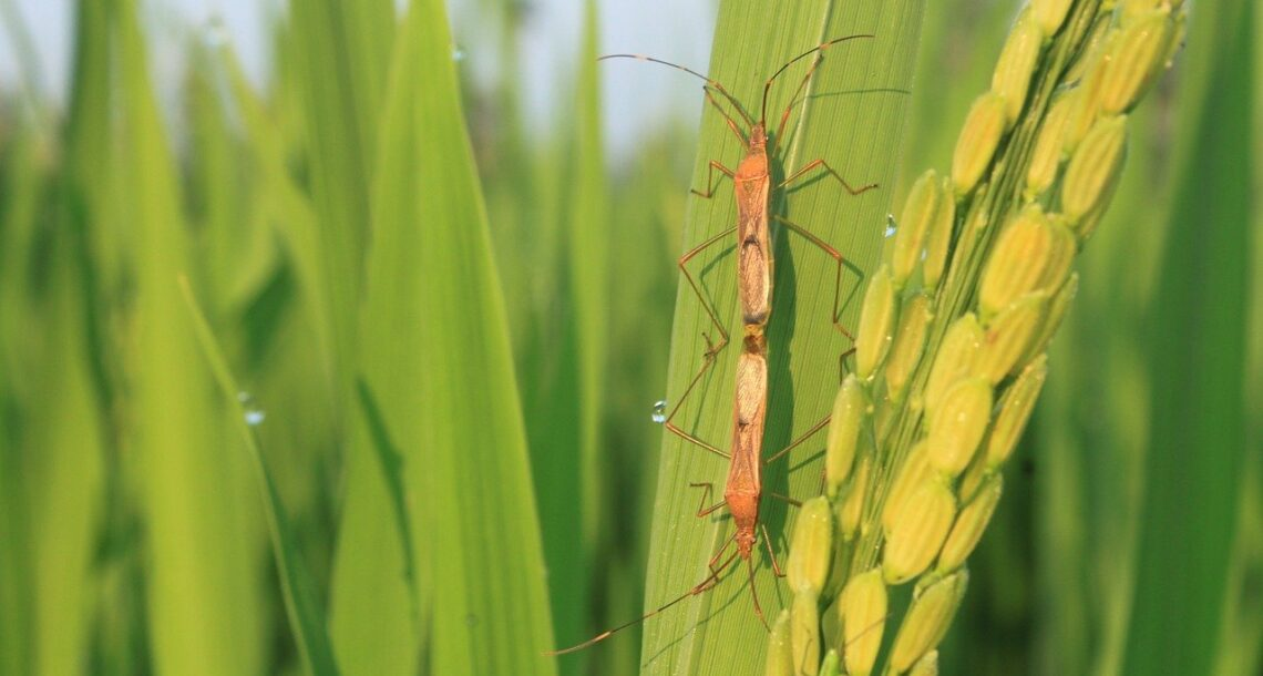 Climate change is helping plant pests spread, the UN warns