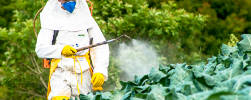 Two-thirds of agricultural land globally are at risk of pesticide pollution