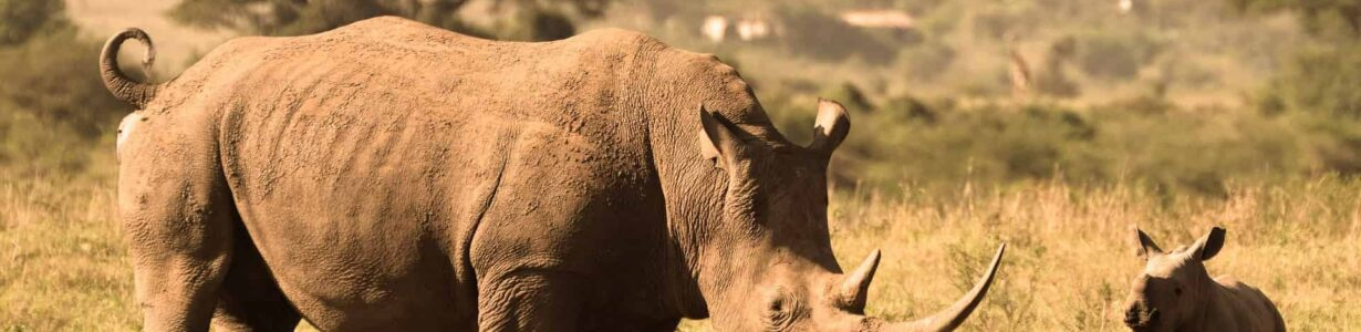 Kenya reaping the benefits of its aggressive anti-poaching drive, bolstered by Ellipse Projects radios and CyberTracker app