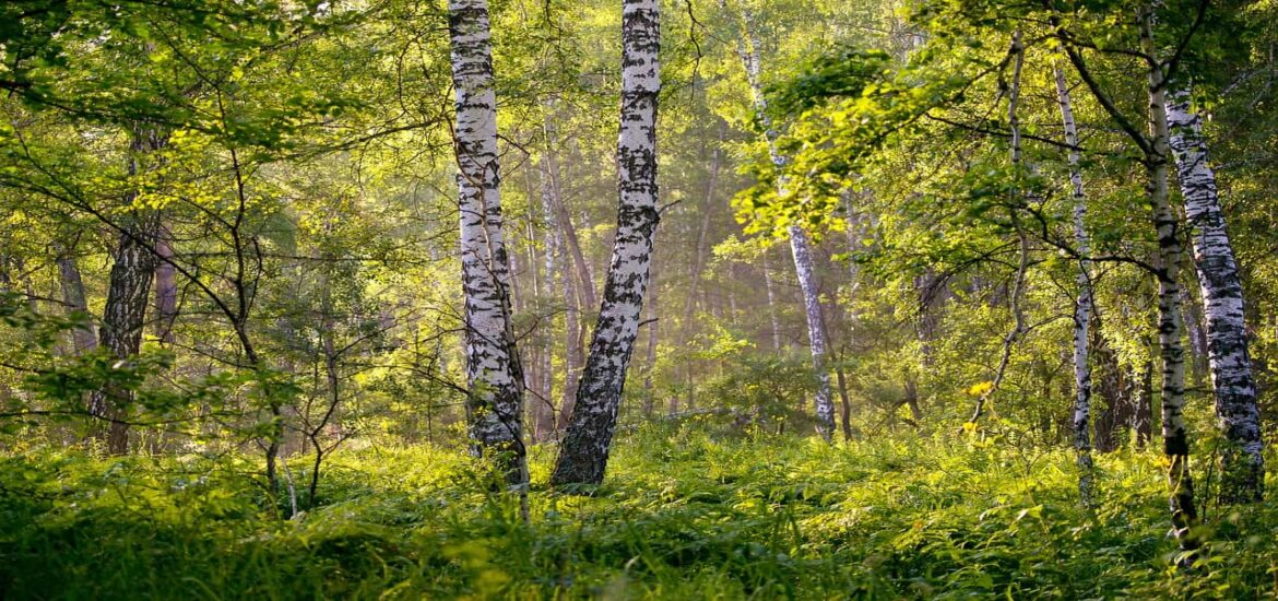 Russia's vast forests sequester far more carbon than previously thought