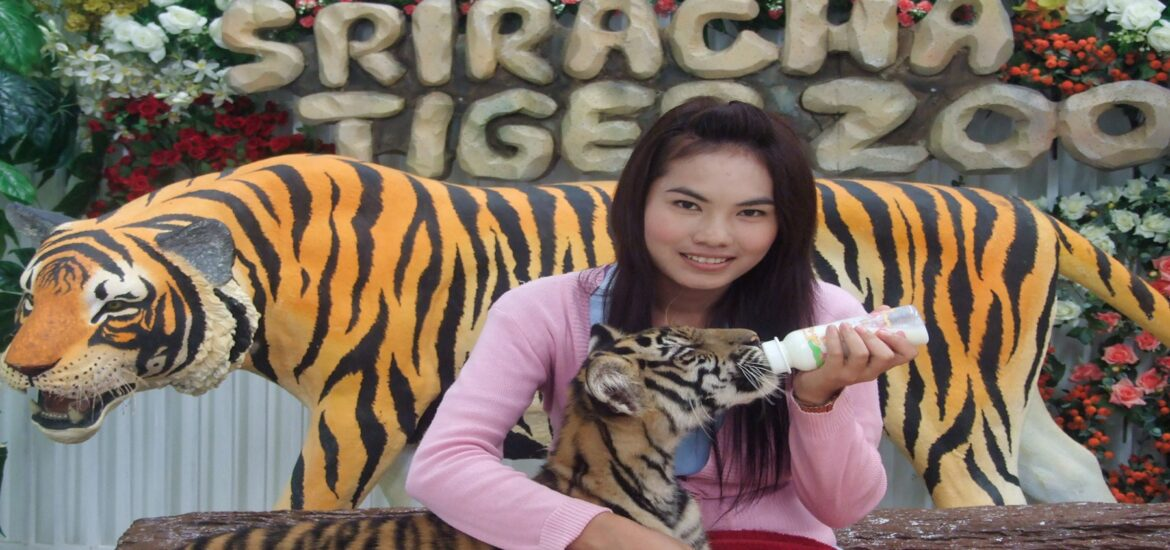 A silver lining to the pandemic: a notorious Thai tiger zoo closes for good