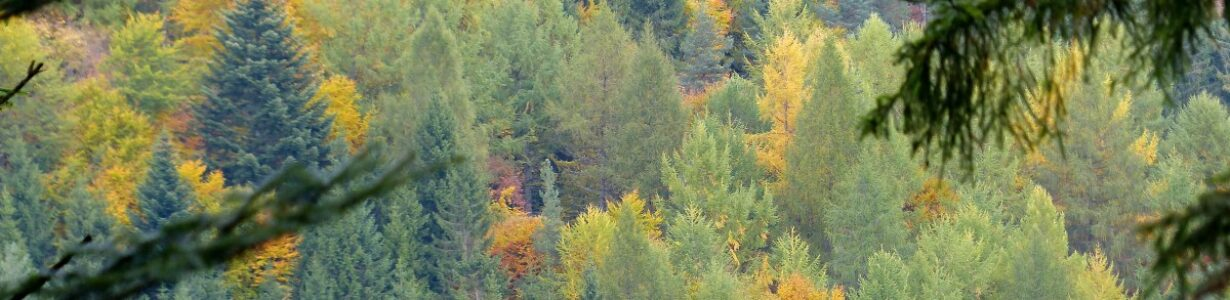 Europe's forests are under threat from a changing climate