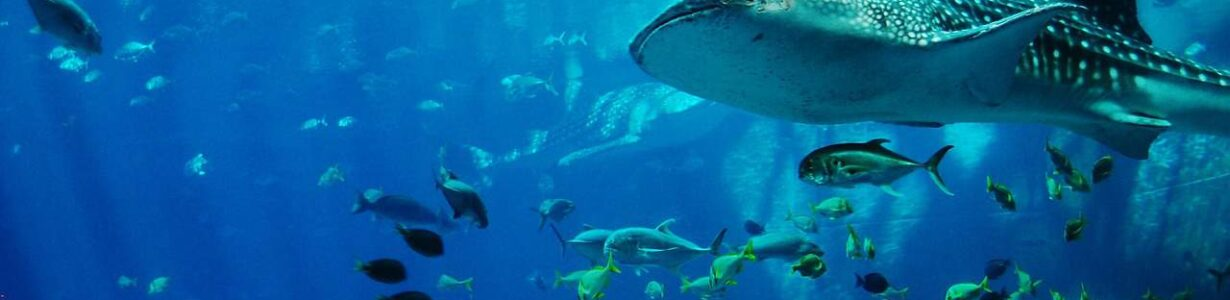 Many sharks and rays are 'nearly extinct,' but we can still save them